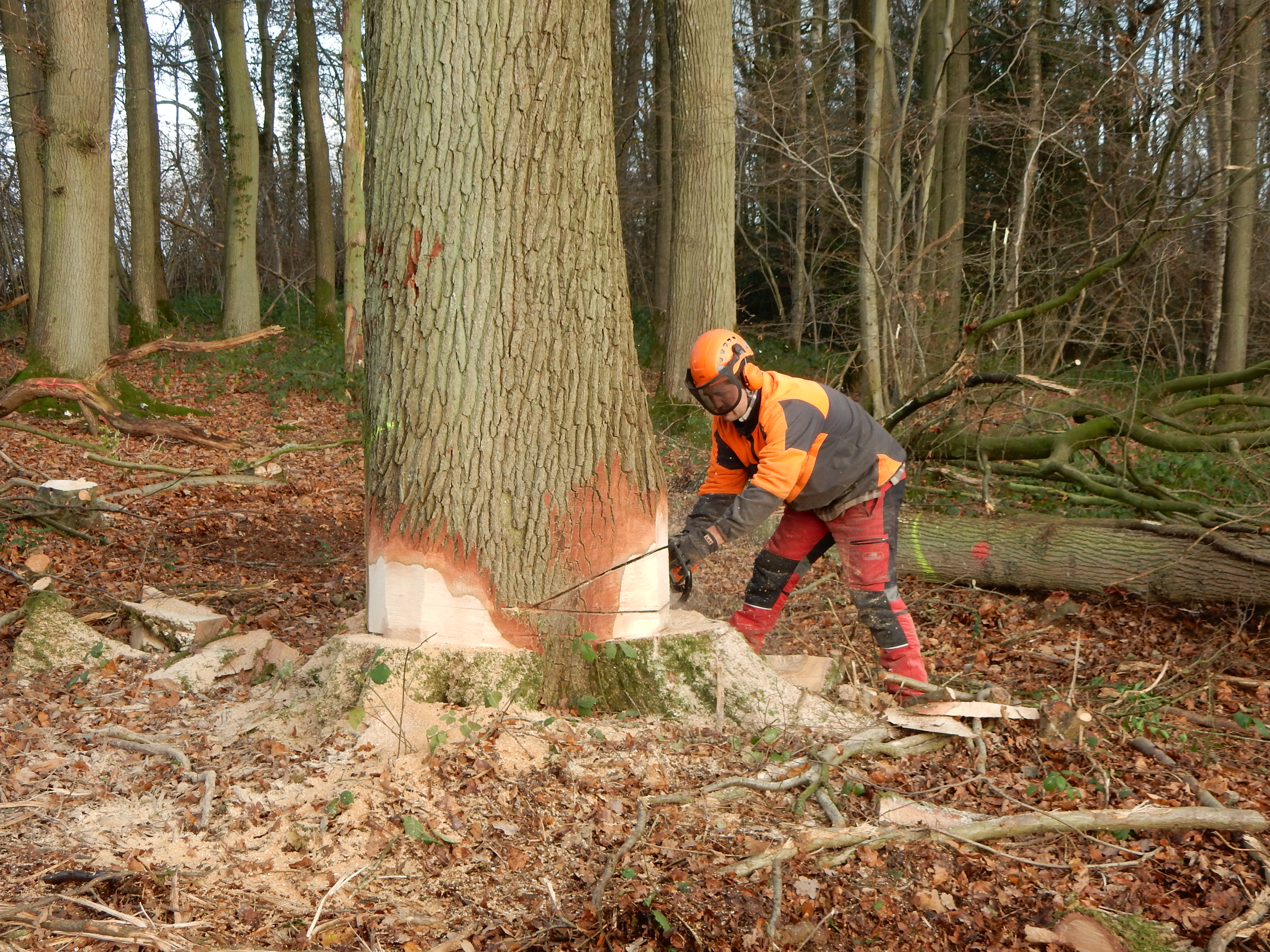abattage d 39 arbres lagage et d brousaillage pont l 39 v que calvados 14. Black Bedroom Furniture Sets. Home Design Ideas